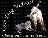 Cowdog video link