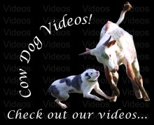 Cow Dog Videos