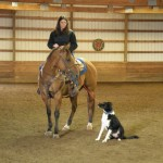 cowdog training clinic