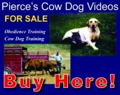 Dog Video Sales