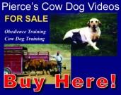 Video Sales2